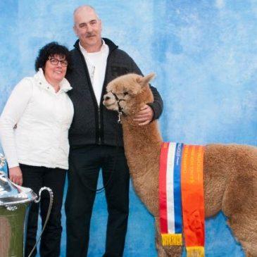 Alpacashow Hapert 2014