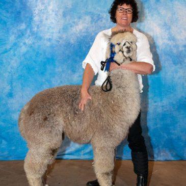 Alpacashow Westerlee 2014