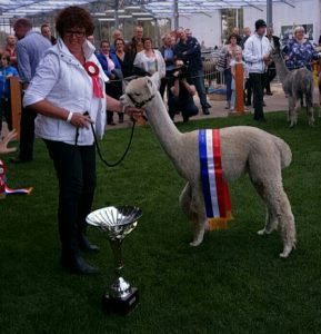 alpacashow boekel 2016 grand champion