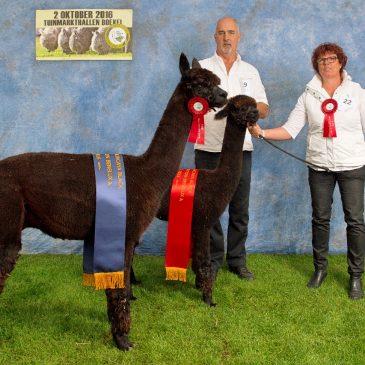 Internationale Alpacashow Boekel 2016