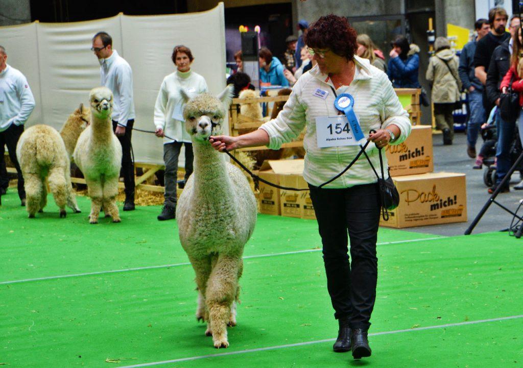 Alpacashow Ilshofen 2017 - VekoFarm Antares