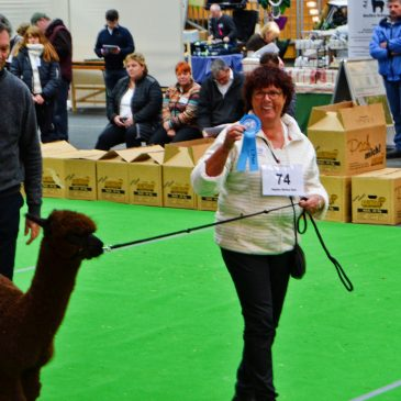 Alpacashow Ilshofen 2017