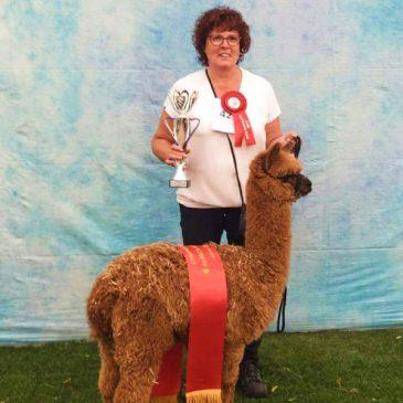 Alpacashow Boekel 2017