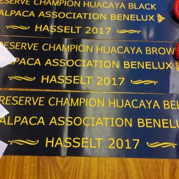 Internationale Alpacashow Hasselt 2017