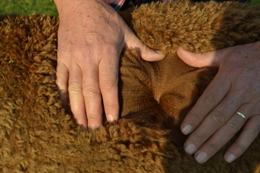 Alpacawol bruin
