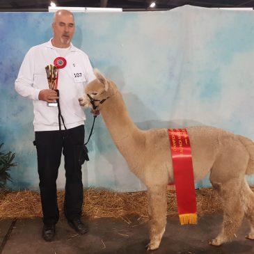 Alpacashow Weelde 2018