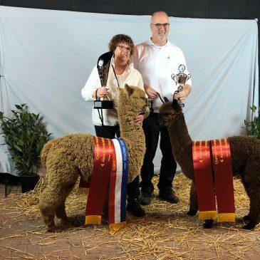 Alpaca Expo Drachten 2020