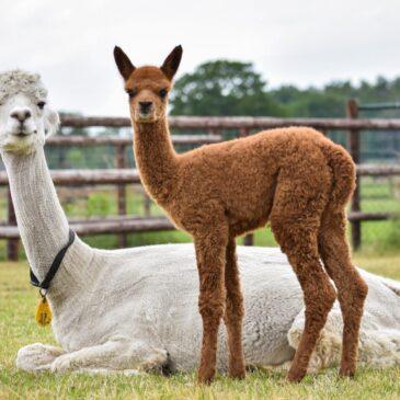 In November weer dieren in de verkoop!